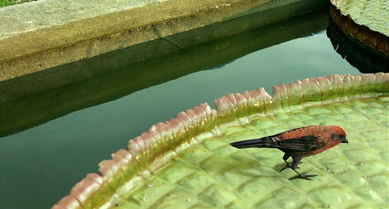 Life of Pi 2012 720p BRRip x264 Multi [Hindi+Eng+Tamil+Telugu] DD 5 0  Msubs ~ Ranvijay